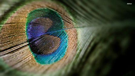 Wallpaper Desktop Background Bird (36)
