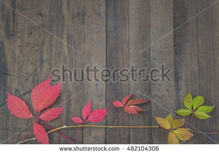Red virginia creeper on wooden background. Upper view with copy space