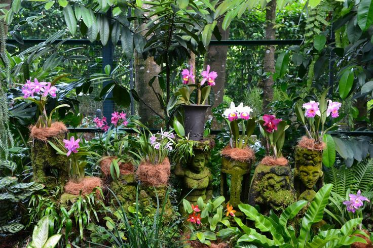 Singapore Botanic Garden, downtown Singapore's main green lung, boast a small tropical rainforest and the world's largest orchid garden featuring over 60,000 plants and orchids.