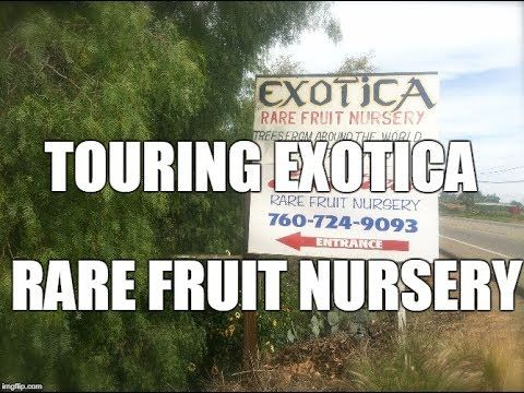 Exotica Rare Fruit Nursery Featuring The Exotic And Plants Of