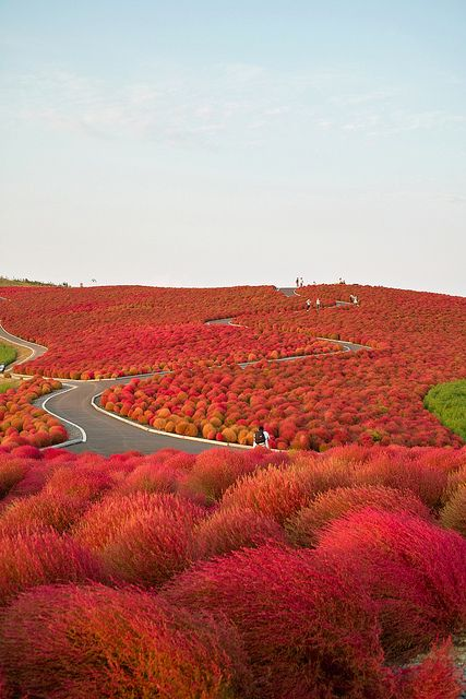 Hitachi seaside park, Hitachinaka, Ibaraki, Japan