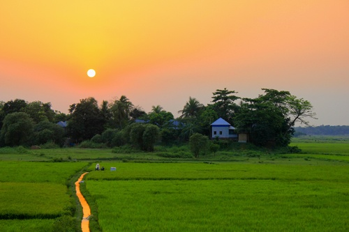 In the land of green and gold… BANGLADESH