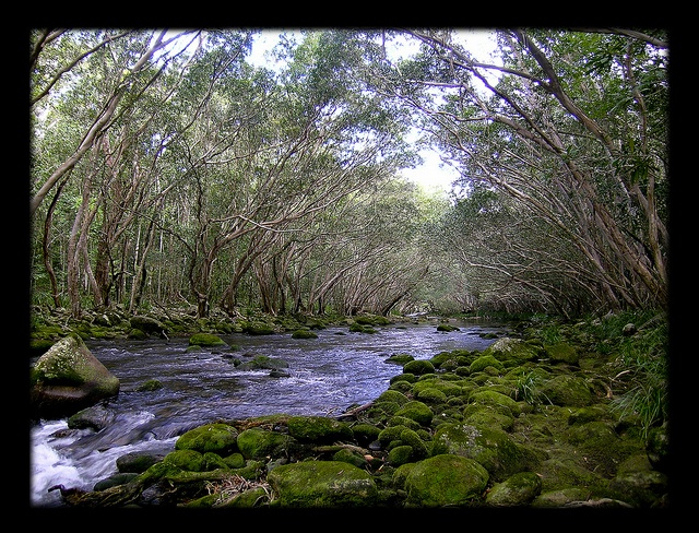 Behana Creek by S. glenum, via Flickr