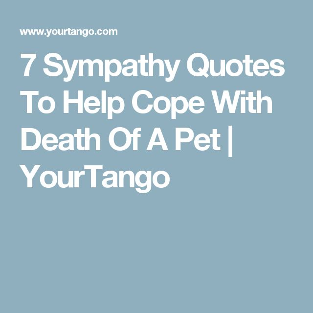 Sympathy Dog Quotes: 25+ Best Pet Sympathy Quotes On Pinterest