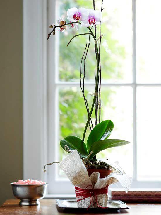 Decorative Orchid Flowerpot