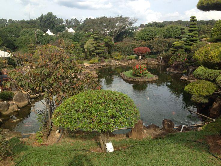 The Koi pond in the artist village