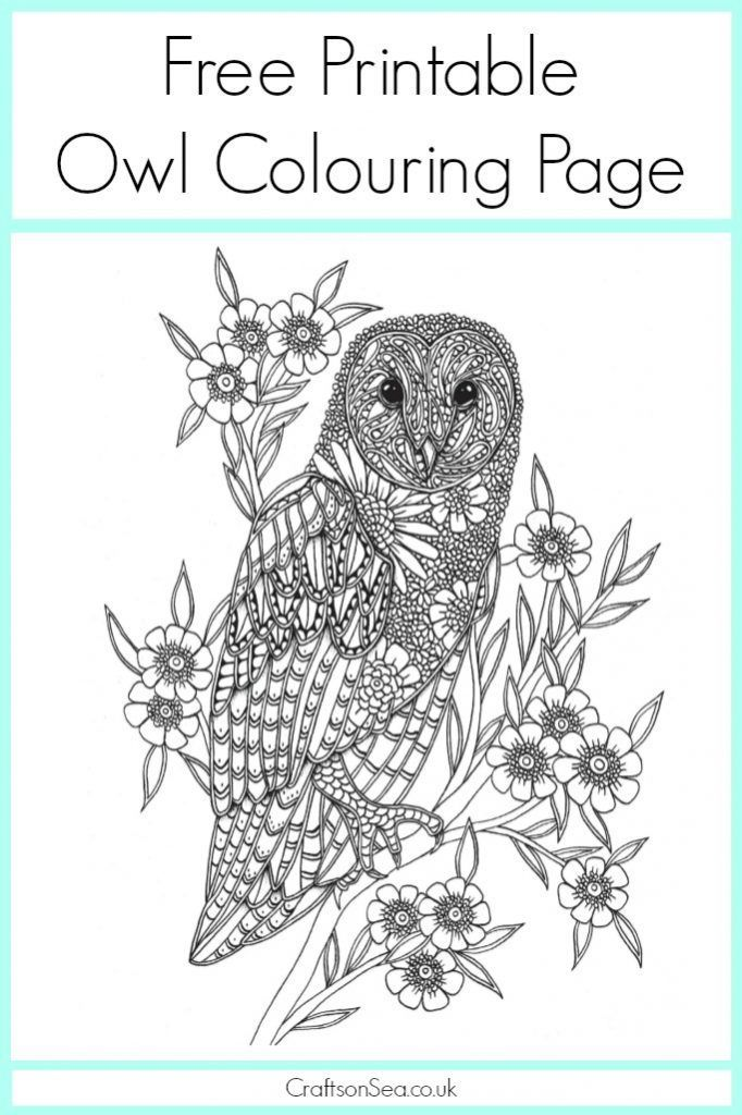 free owl colouring page - Printables Kids