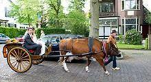 Voor wie gek is van koeien! #trouwvervoer #koe #bruiloft