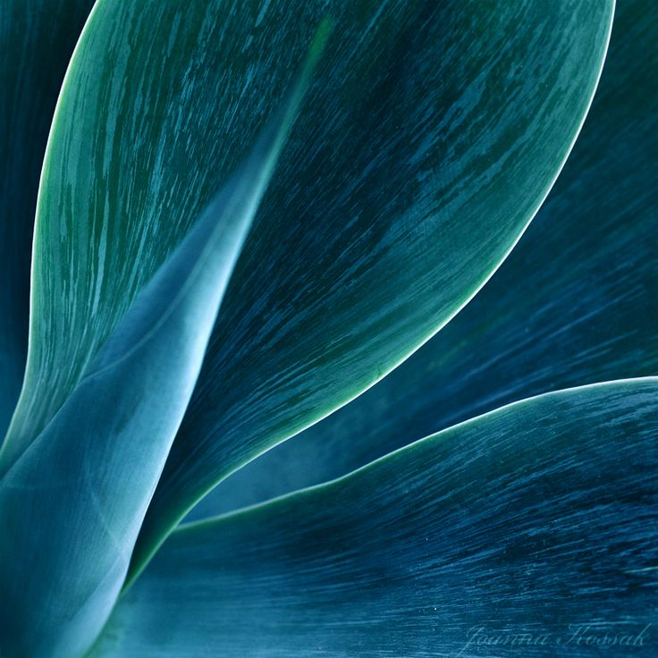 Agave abstract God bless the Agave plant for it doth provide the great tequilla.