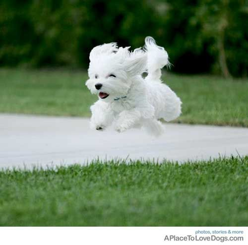 happy bounding pup: Random Pictures, Happy Bound, Happy Pup, Bound Pup, Happy Flying, Pup Animal, I M, Zippi Dogs, Flying Puppies