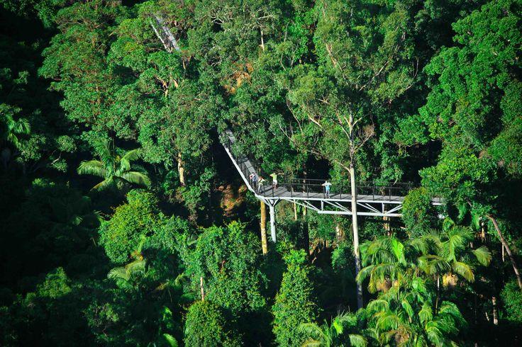Tamborine Rainforest Skywalk, Gold Coast, Australia