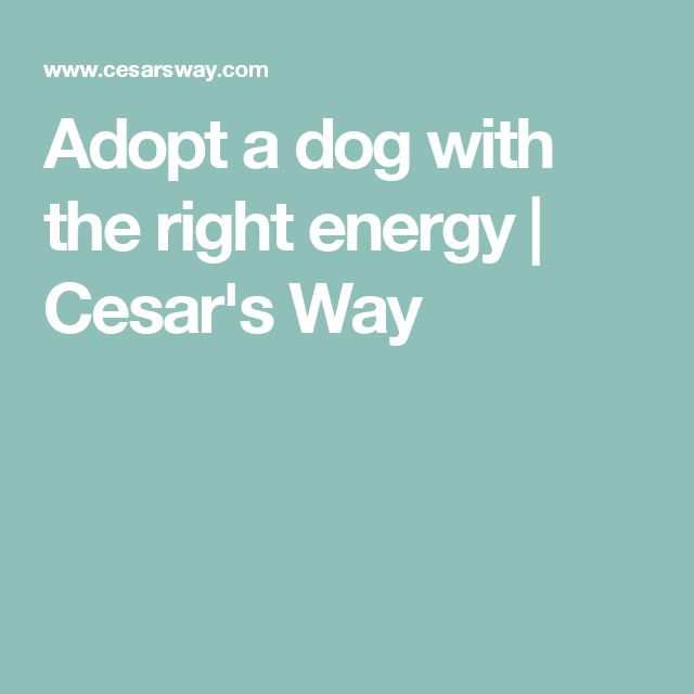 Adopt a dog with the right energy | Cesar's Way