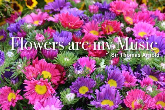 Flowers Are My Music - http://plantcaretoday.com/flowers-are-my-music.html