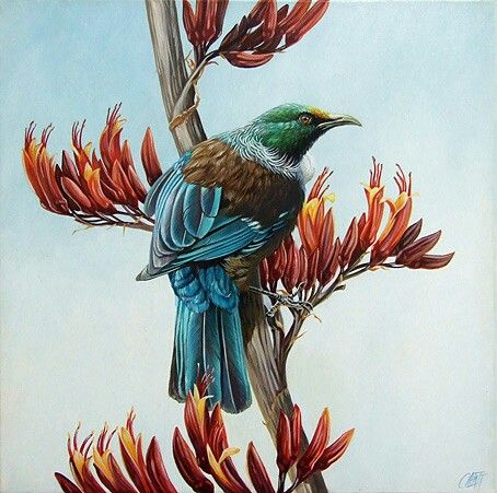 Tui amongst flax flowers - Craig Platt NZ native bird artist