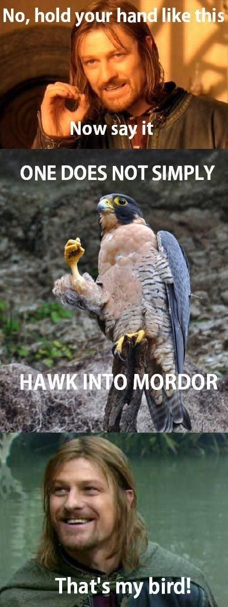 LOTR Meme... One does not simply Hawk into Mordor.... Dying.