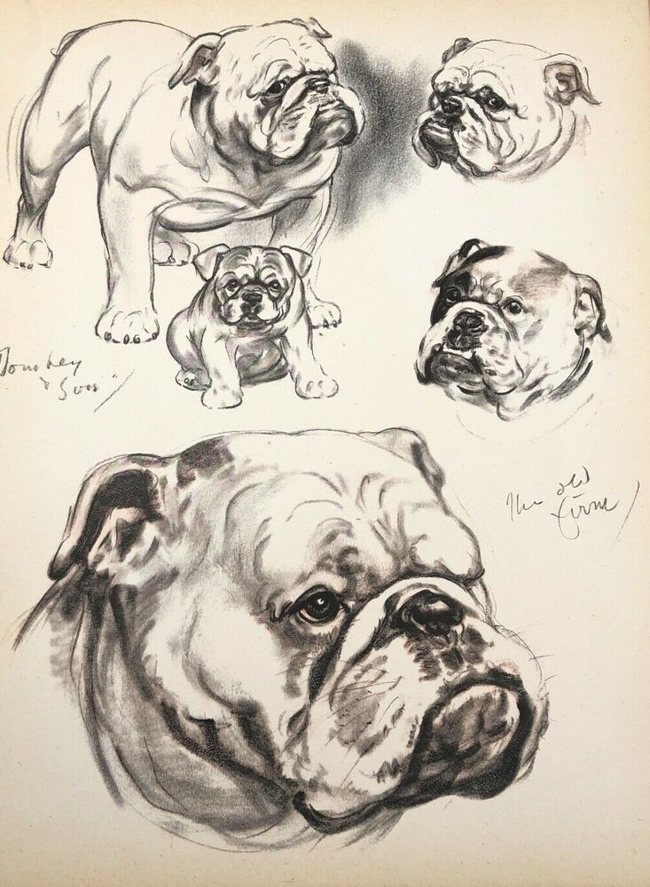 Diana Thorne S Dogs 1944 English Bulldog Lithograph Print Portrait