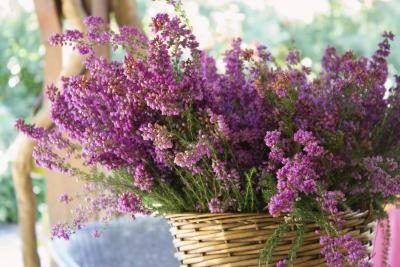 basket of heather flowers