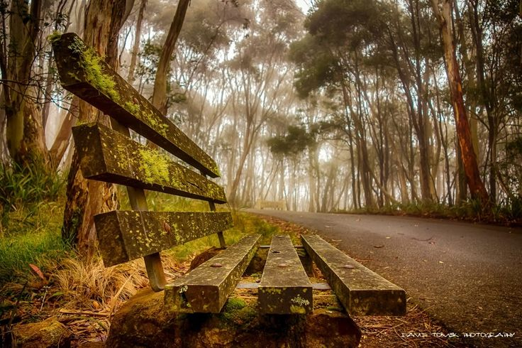 Bench & Path in Forest