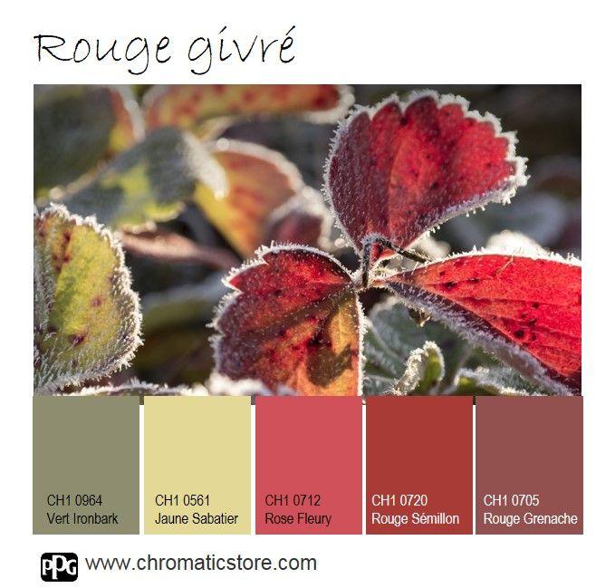 Le #Rouge Sémillon, chaleureux, festif et gourmand enchantera décembre : sur un mur en #déco intérieure comme en accessoires et #arts de la table. www.chromaticstore.com