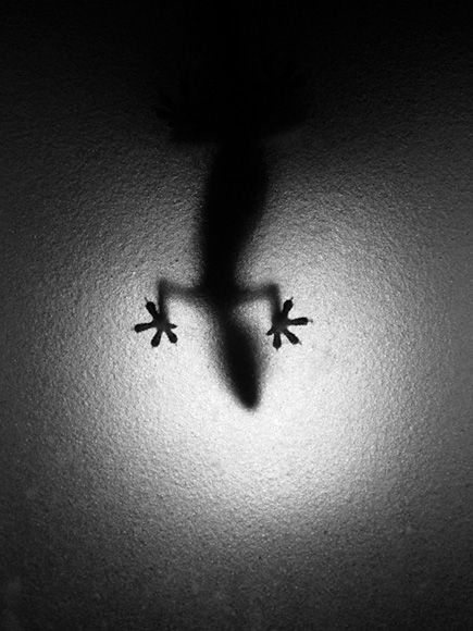 Andrew Scharlott: Lights Fixtures, Black White Photography, Black And White, Inspiration Photography, Kauai Hawaii, Lizards, Shadows, Geckos