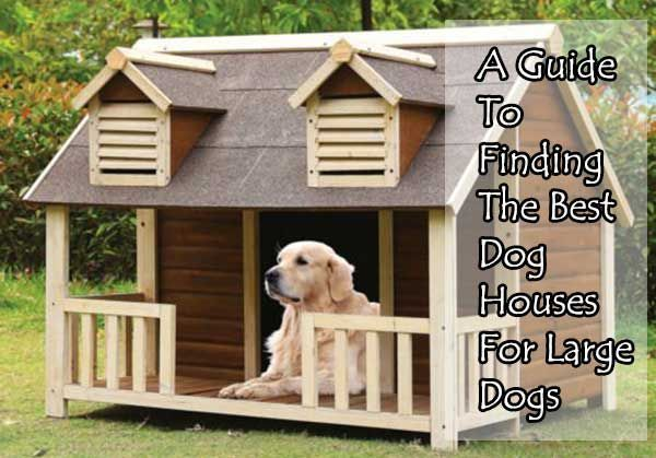 A Guide To Finding The Best Dog Houses For Large Dogs