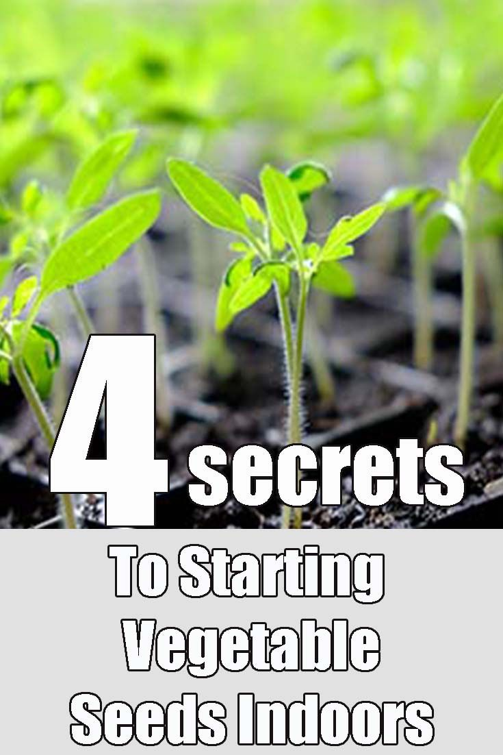4 Secrets To Starting Vegetable Seeds Indoors – Grow Your Own Plants!