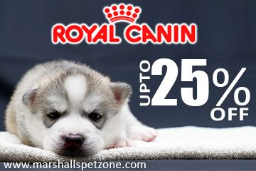 Grab Upto 25%OFF On Royal Canin; Free Food Samples+ Rs.250Coupon T&C Apply*Purchase Royal Canin Pet Food  And Save Up to 25% Off   Deal Not Be Missed. Start Shopping & Let The Nutrition Your Pet Count On. Keep Your Pet Healthy & Hearty. ► SHOP ROYAL CANIN - Dog Food ► SHOP ROYAL CANIN - Cat Food.