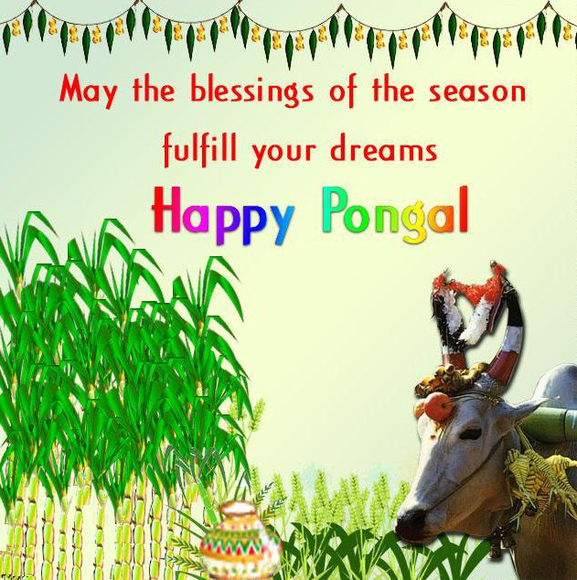advance happy pongal hd images