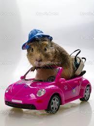 Afbeeldingsresultaat voor grappige autos
