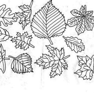 maple autumn leaf decoration coloring page maple autumn leaf decoration coloring page kids play