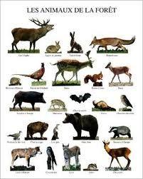 les animaux de la forêt maternelle - Recherche Google