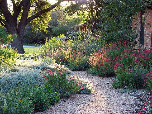 Plano Prairie Garden Garden Design Pinterest Gardens
