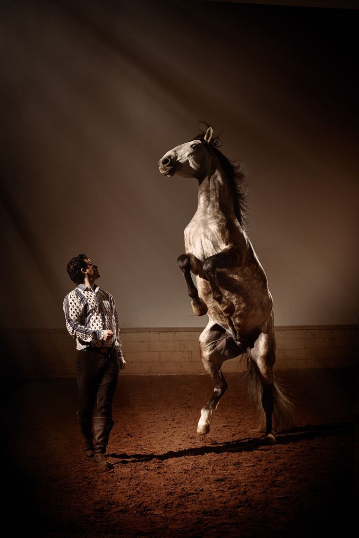 Top marks to local Provencal brand Souleiado for this shot of a gorgeous stallion. The shirt is pretty nice too.
