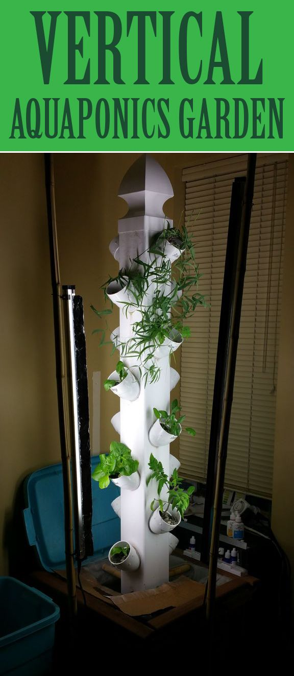 Learn about aquaponics. It's fascinating!