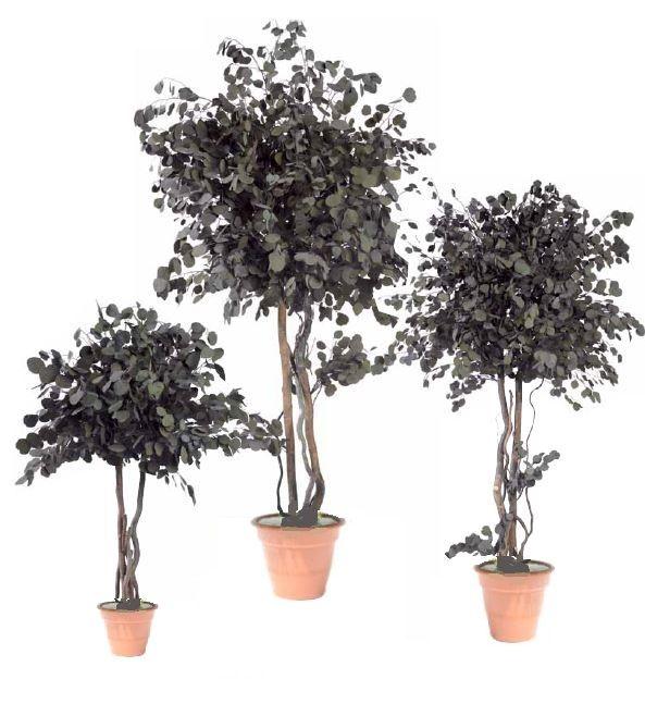 Tree stabilized Eucalyptus Popolus #PreservedMoss #Stabilizedplants #stabilisiert #Pflanzenbilder #GrüneWand #Gartengestaltung #стабилизированныерастения #gardendesign #greenarchitecture  #greenwalls #mossframe #mosswalls   #verdeverticale #verticalgarden #bonsaistabilized #preservedplants  #rosestabilized