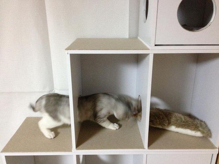 【画像】 猫タワーをカラーボックスを利用して作ってみた 【DIY】 : 〓 ねこメモ 〓