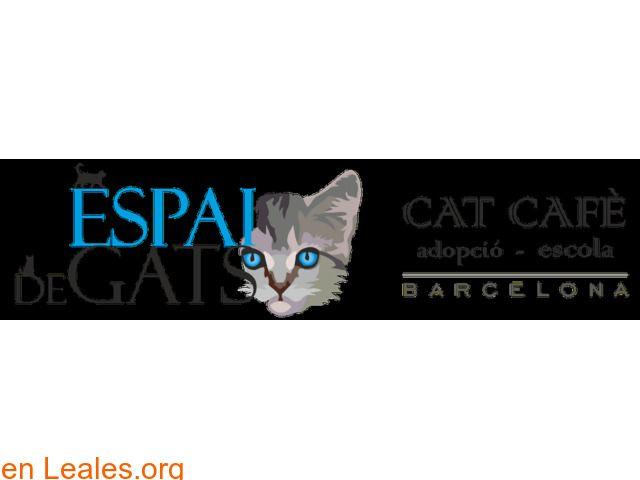 Convivencia gatuna  España  Barcelona  Barcelona March 11 2018 at 11:51AM   ESPAI DE GATS BARCELONA ℹ Bienvenidos a Espai DeGats el primer CAT CAFÉ de Barcelona que además es un Centro de Adopciones de gatos y una Escuela. Aquí te podrás relajar en compañía de nuestros queridos gatos y si te enamoras de alguno de ellos lo podrás adoptar. Todos son gatos abandonados buscando hogar. Además podrás aprender muchas cosas nuevas sobre gatos y bienestar animal. Horario: Lunes: Mañana cerrado…