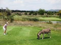 T-off on the wild side at Zebula Lodge.