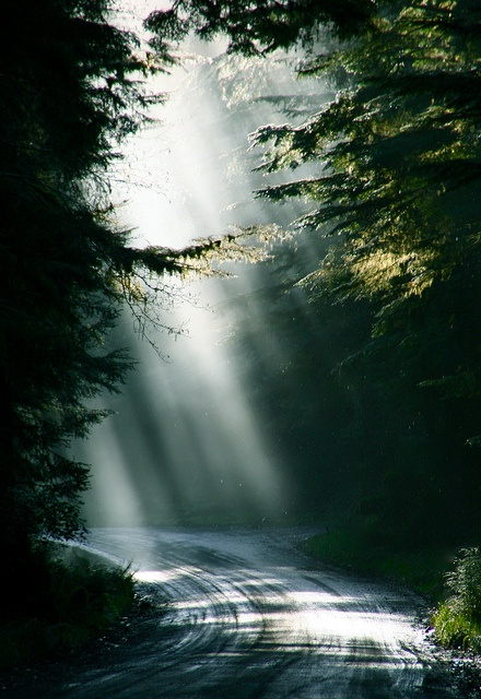 Haida Gwaii by Daleduro, via Flickr