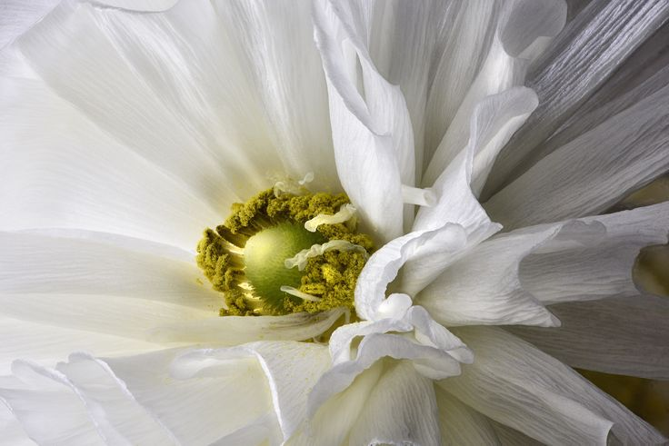a flower is a living art form by Marcello Machelli on 500px
