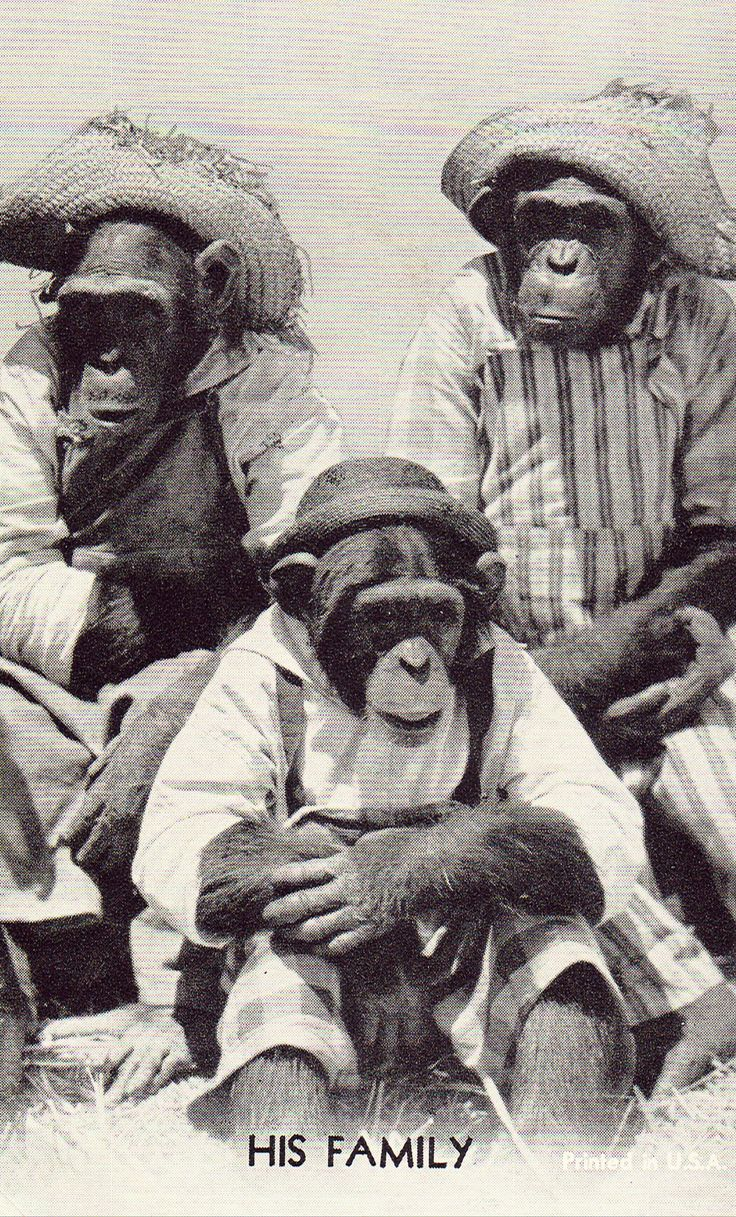 Funny Postcard - 3 Monkeys Dressed as Humans