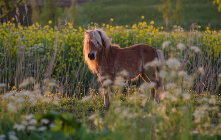I see you ! by JHanna . https://500px.com/photo/213049015/i-see-you-by-jhanna-?ctx_page=5&from=popular #animal #horse