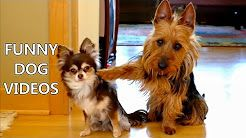 funny dog videos - YouTube