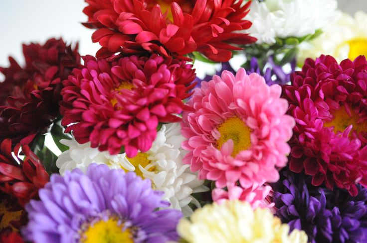 I love big bouquets of colorful asters in autumn.