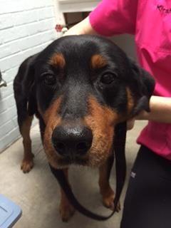 Dog Training Snellville Ga