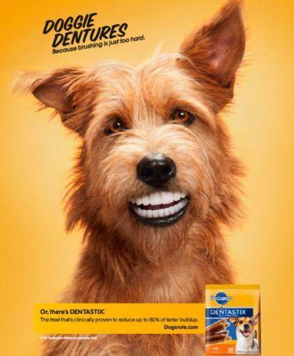 Doggie Dentures!