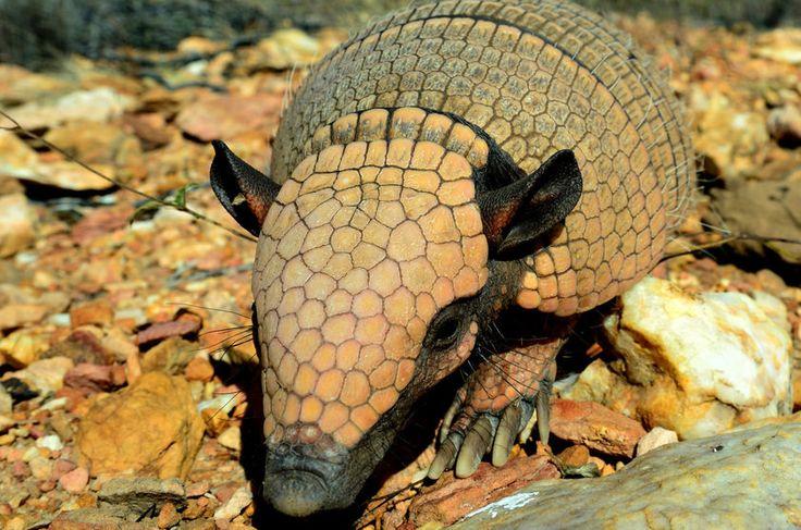 Foto do livro Caatinga Selvagem – O Legado de um Projeto de Desenvolvimento para a Conservação da Fauna