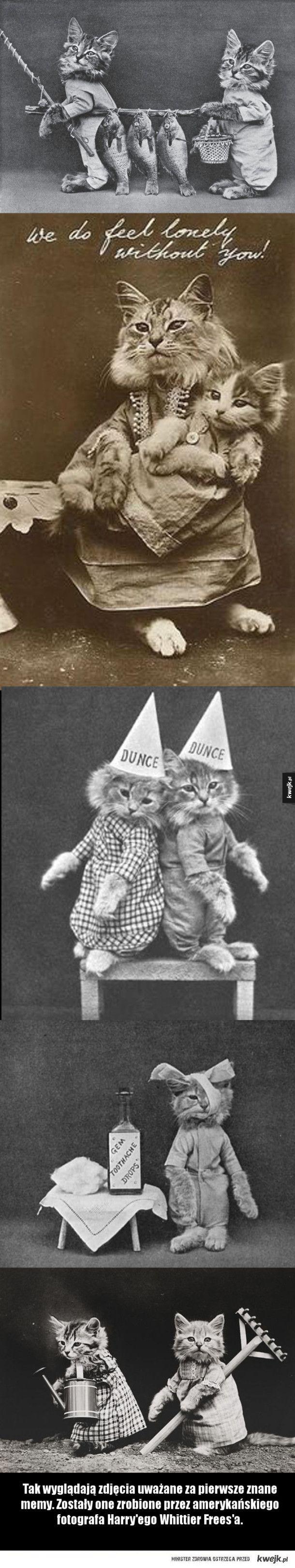 #pierwszememy #memy #ciekawostka #kot #kwejk #fotografia #historia