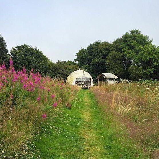 The path to our dome @fforestmanorafon . 📷@veeandbear . #fforest #stayplaydream #visitwales #findyourepic