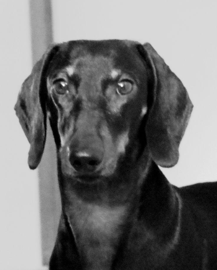 Eddie - Un perrito feliz